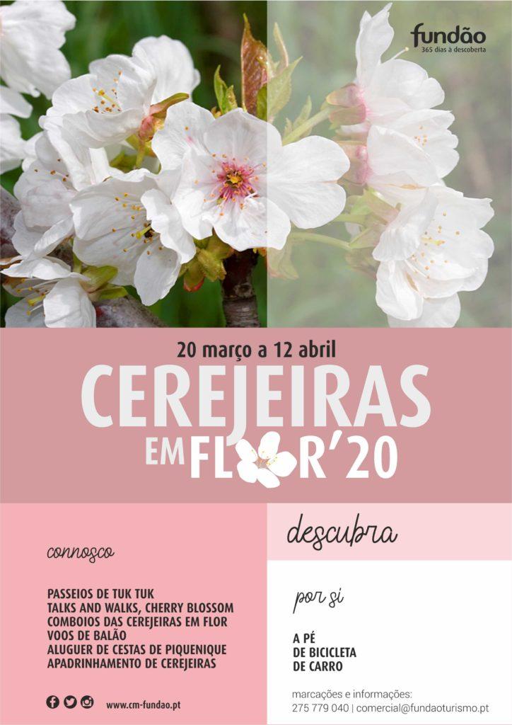 Cerejeiras em Flor